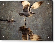 Take Flight Acrylic Print by Andrew Pacheco