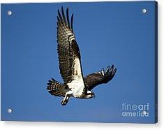 Take Flight Acrylic Print by Mike  Dawson
