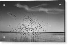Take Flight Acrylic Print