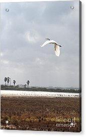 Acrylic Print featuring the photograph Take Off by Erika Weber