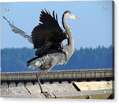 Acrylic Print featuring the photograph Take Off by I'ina Van Lawick