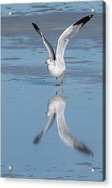 Take Off Acrylic Print