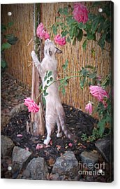 Take Time To Smell The Roses Acrylic Print by Peggy Hughes