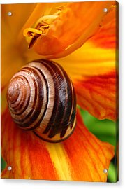 Acrylic Print featuring the photograph Taking A Break by Mary Bedy