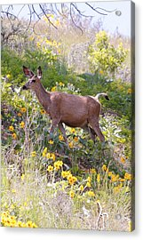 Taking A Stroll In The Country Acrylic Print by Athena Mckinzie