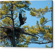 Acrylic Print featuring the photograph Taking Flight by Brenda Jacobs