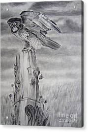 Acrylic Print featuring the drawing Taking Flight by Laurianna Taylor