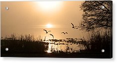 Taking Flight Acrylic Print by Peg Urban