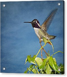 Taking Flight Acrylic Print by Peggy Hughes