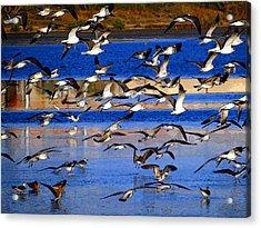 Taking Flight Acrylic Print by Tom DiFrancesca