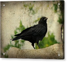 Blackbird Is Taking It All In Acrylic Print by Gothicrow Images