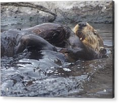 Acrylic Print featuring the photograph Taking It Easy by Christine Drake