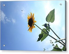 Taking Off Acrylic Print by Lotus
