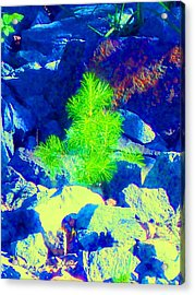Acrylic Print featuring the photograph Taking Root by Ann Johndro-Collins