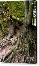 Taking Root Acrylic Print by Heiko Koehrer-Wagner