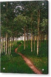 Taking Tthe Path Less Traveled Acrylic Print by Carl Bandy