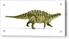 Talarurus Dinosaur Acrylic Print