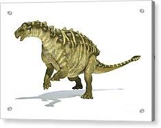 Talarurus Dinosaur On White Background Acrylic Print
