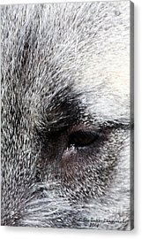 Tala's View Acrylic Print by Ann Butler