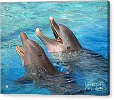 Acrylic Print featuring the photograph Talking Dolphins by Kristine Merc