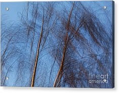 Talking Trees Acrylic Print