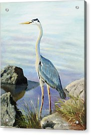 Tall Fellow Acrylic Print