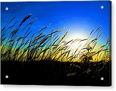 Tall Grass Acrylic Print by Bill Kesler