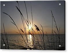 Tall Grass Sunset Acrylic Print