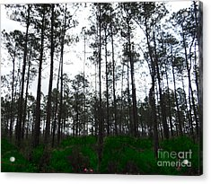Tall Tree Forest Acrylic Print by Ecinja Art Works