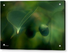 Acrylic Print featuring the photograph Tallow Tree by Travis Burgess