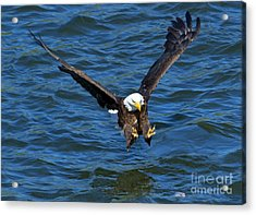 Talons First Acrylic Print by Mike Dawson