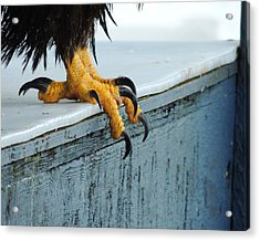 Acrylic Print featuring the photograph Talons by Karen Horn