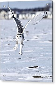 Talonted Acrylic Print by Heather King