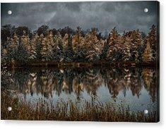 Tamarack Reflections Acrylic Print by Paul Freidlund