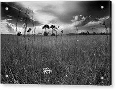 Tamiami Trail Acrylic Print