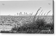 Tampa Across The Bay Acrylic Print
