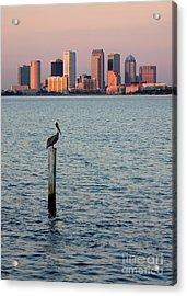Tampa Skyline And Pelican Acrylic Print by Carol Groenen