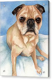 Tan And Black Pug Dog Acrylic Print by Cherilynn Wood