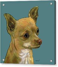 Tan Chihuahua Acrylic Print