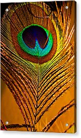 Tan Feather Acrylic Print