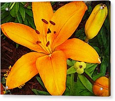 Acrylic Print featuring the photograph Tangerine Asiatic Lily by Shawna Rowe