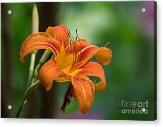 Tangerine For A Day Acrylic Print