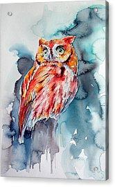 Tangerine Owl  Acrylic Print