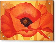 Tangerine Poppy Acrylic Print by Linda Hiller