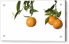 Tangerines On Branch Acrylic Print by Anna Kaminska