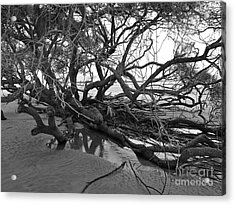 Tangle Acrylic Print by M West