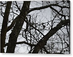 Tangled Acrylic Print by Catherine Peterson