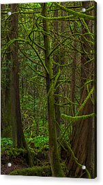 Acrylic Print featuring the photograph Tangled Forest by Jacqui Boonstra
