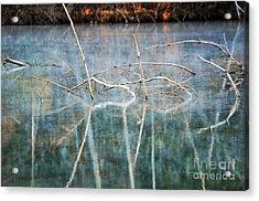 Tangled Acrylic Print by Li Newton