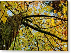Tangled Up In Yellow Acrylic Print by Robert Holmberg